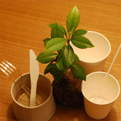 biodegradable and compostable utensil set