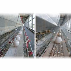 eggs conveyor belt
