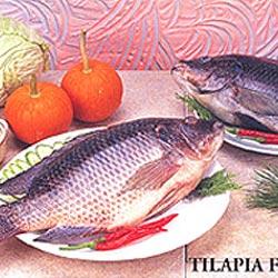 frozen-seafoods