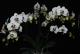Live Plants image